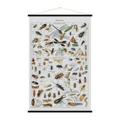 Blue Shaker - Insects Print